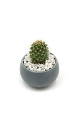 Small green cactus isolated on a white background