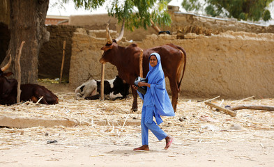 A girl walks past a bull stall on the street in Dapchi, Yobe state
