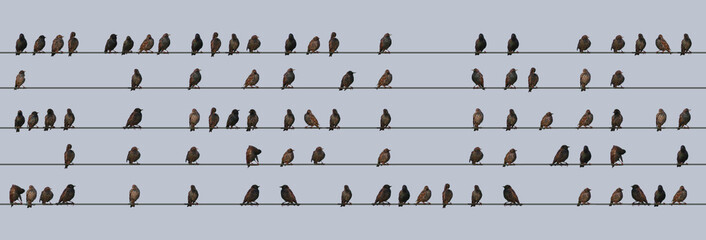 The word STARLING made from Starlings on a wire