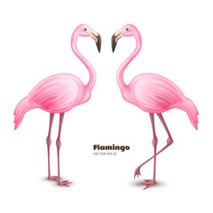 Vector realistic 3d pink flamingo set