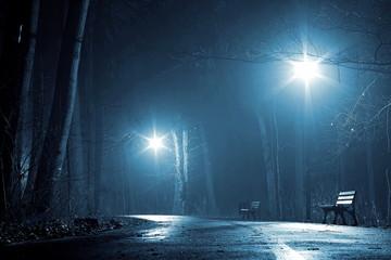 mglista noc w parku
