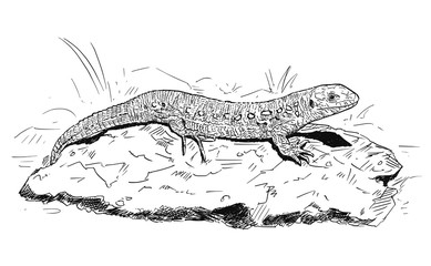 Vector artistic pen and ink hand drawing of female sand lizard sitting on stone.