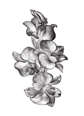 Flower sketch orchids bouquet hand drawing by pencil