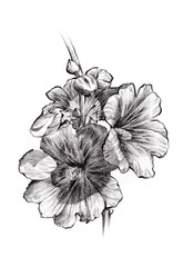 Flower sketch bouquet hand drawing