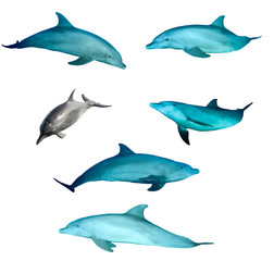 Bottlenose Dolphins isolated on white background