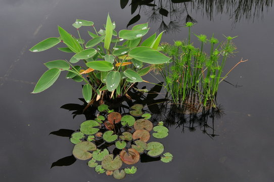 Serene reflecting pool with aquatic vegetation