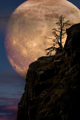 Supermoon with lone tree on cliff edge