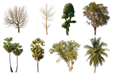 Tha collection of trees, Isolated trees on white background.