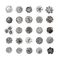 Different plants and trees vector set for landscape design