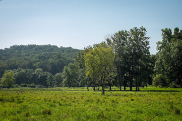 Wall Mural - Trees in the Pasture