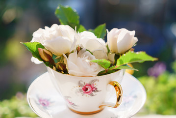 white roses in the cup