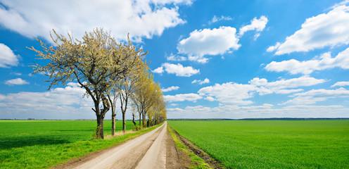 Wall Mural - Kulturlandschaft im Frühling, Feldweg, Baumreihe, endlose grüne Felder
