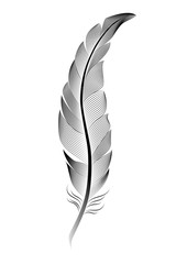Stylized black feather on a white background.