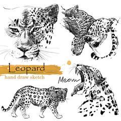 Leopard hand draw sketch. Wild animal illustration.