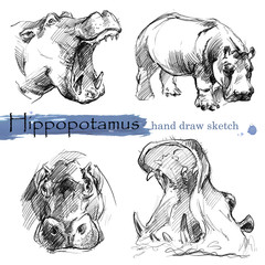 Hippopotamus hand draw sketch. Wild animal illustration.