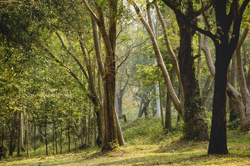 Landscape of trees in the forest, conservation, good morning with golden light.