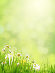 Green background with grass, daisy flowers and Easter eggs