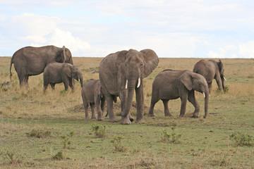 Herde von Elefanten im Nationalpark