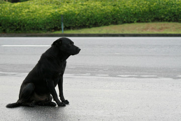 black dog sitting on the roadside and looking at the road