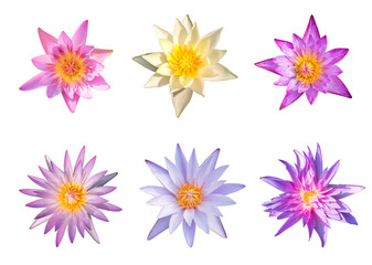 Multi colors lotus on a white background.The color of lotus.file with clipping path.