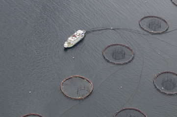Aerial view of net-cage fishfarm in the Orkney Islands