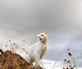 Primeiro plano gato branco sentado sobre um tronco, ao fundo céu com nuvens dispersas.