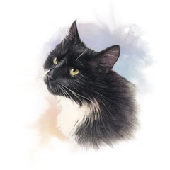 Balck cat with white breast. Watercolor portrait of a cat. Realistic drawing of a cat with green eyes on the white background. Good for print T-shirt, cover, card. Hand painted watercolor illustration