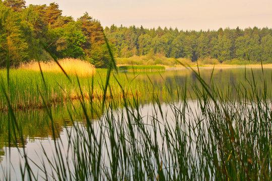 See Natur im Sonnenschein Schilf Wald Bäume Ruhe