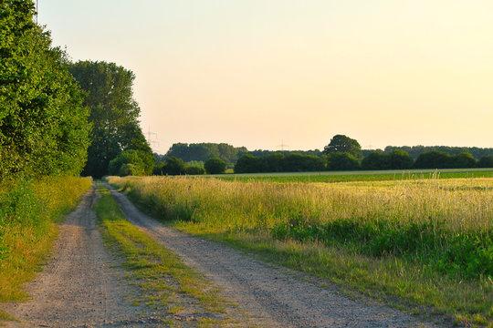 Feldweg mit Bäumen im Sonnenuntergang