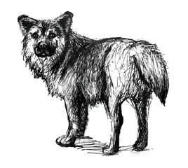 Dog. Line drawing