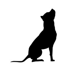 American Pit Bull Terrier silhouette isolated on white background dog vector illustration