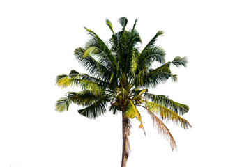 Palm trees in Thailand  isolated on white background