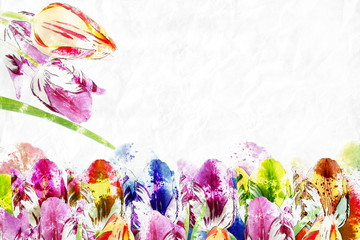 tulip Floral watercolor background