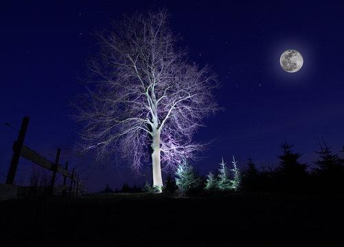 Bäume Mond Sterne Halloween