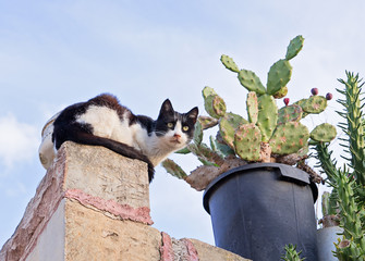 One neighbor's scared cat on fence and cactus in pot, low angle view