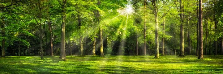 Grünes Wald Panorama im Sonnenlicht