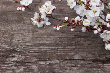 A wooden textural background with a bouquet of flowering apricots wrapped in string