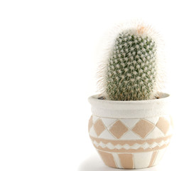 Small potted cactus on plain white background