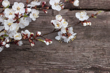 Wooden texture background with flowers apricots