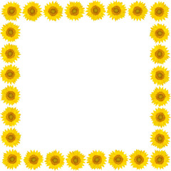 Frame of sunflower flowers on isolated white background. Top view.