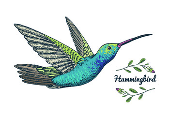 Small hummingbird. Rufous bird. Exotic tropical animal icons. Golden tailed sapphire. Use for wedding, party. engraved hand drawn in old sketch.