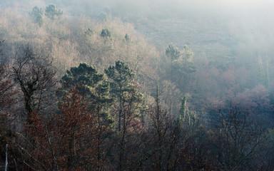 Foggy sunrise in the woods