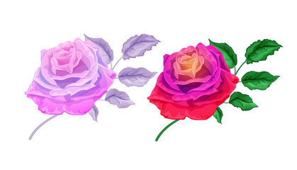 Hand drawn rose blossoms with leaves set
