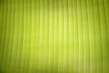banana leaf closeup for background