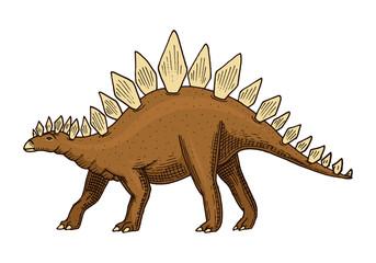 Dinosaur Stegosaurus, fossils. Prehistoric reptiles, Animal engraved Hand drawn vector.