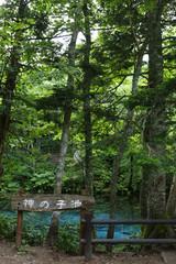 北海道道東の神の子池