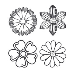 Rustic flowers over white background vector illustration