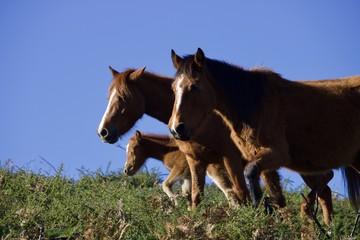 Cavalo selvagem, calados selvagens