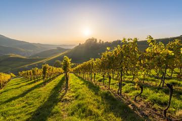 Durbach, Freiburg region, Black Forest (Schwarzwald), Baden-Württemberg, Germany. Vineyards and Staufenberg Castle.