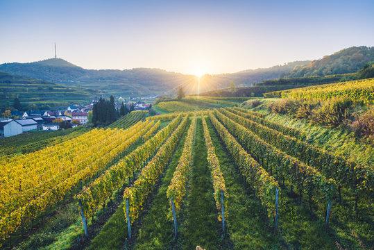 Bickensohl, Vogtsburg im Kaiserstuhl, Kaiserstuhl region, Black Forest (Schwarzwald), Breisgau-Hochschwarzwald, Baden-Württemberg, Germany. Vineyards at sunrise.